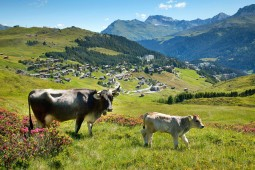 All-Inclusive Sommerurlaub in Arosa